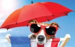 Hond in zon